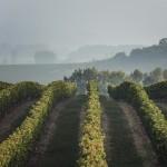 rallye des grands crus, vin, oenologie, bourgogne, rallye de regularite, rallye auto, route des grands crus