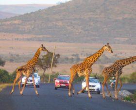 Roadtrip, Tanzanie, M6 Turbo, Peugeot, 5008, Peugeot 5008, SUV, testdrive, essai, Citroen C5 aircross, renault koleos