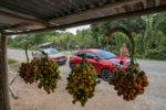 clemence de bernis, m6 turbo, roadtrip, ford puma, guyane,